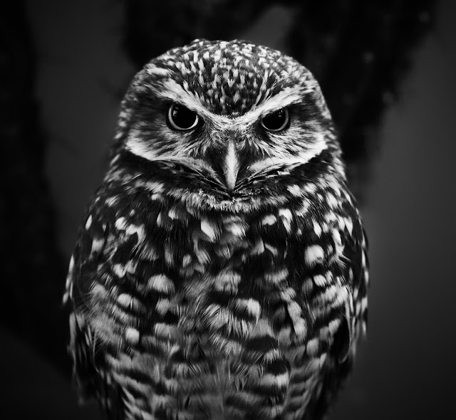 It's about Wellness and Disease Prevention…..Are you the wise owl were looking for?
